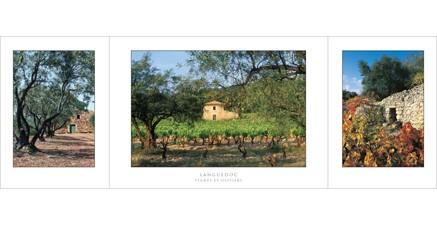 L.52 - Languedoc (Vigne et oliviers)
