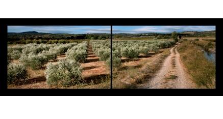 LP.03 - Le chemin des oliviers