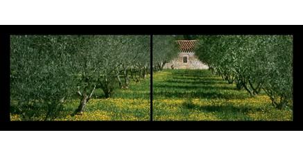 LP.05 - Le mas aux oliviers