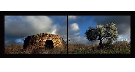 LP.09 - Capitelle et olivier