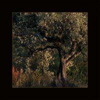 ES.09 - La lumière de l'olivier