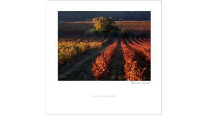 ET.08 - Languedoc