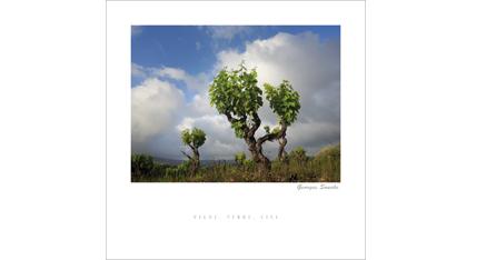 ET.09 - Vigne, terre, ciel