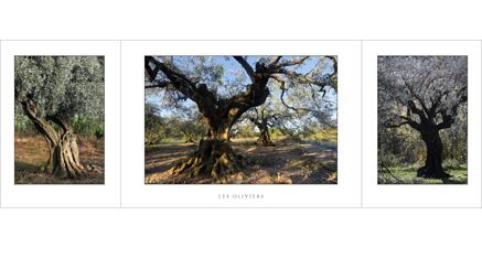 L.80 - Les oliviers